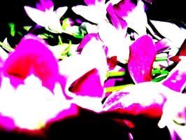Singapore Orchids 01 by geek-riot