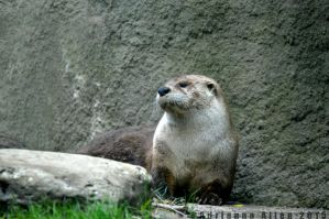 Otter by Music-Boxx
