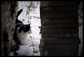 the cat by Bodhisattvacary
