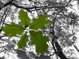 its green and its leafy by ophelia1022