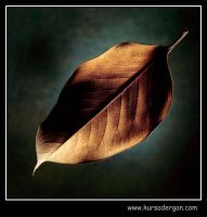 leaf1 by kursad