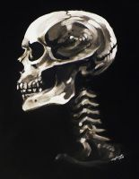 skull in profile by undead-medic