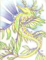 leafy sea dragon. by iwuvrubberduckies