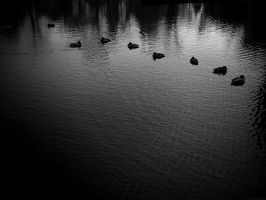 ducks by pinyty
