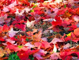 Red Fall Leaves by wiwijumbo