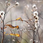 Frosty_Delicacy_of_Autumn IV by hyneige