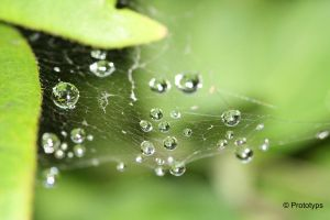 Spiderweb and waterdrops by Prototyps