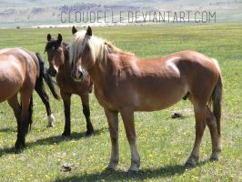 035 Flaxen Chestnut w big forelock by cloudelle
