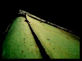 Green Grin. by andrahilde