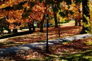 Fall On Campus 1 by nazzara