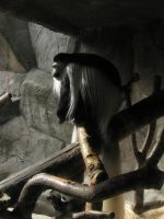 Black and White Colobus by symbion-pandora