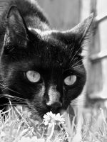 Sniffing the Daisies by gee231205