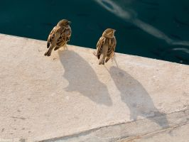 Sparrows by GreenL15