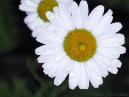 Marguerite by Pinutte