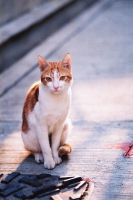 Street Cat by angela-wong