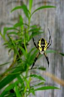 Spider by n2950895
