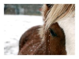 horse in snow. by visual-sick