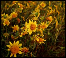 The Yellow Ones by JoeBostonPhotography