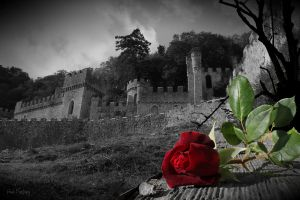 Castle and red rose by Sad-Fantasy