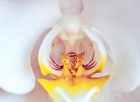 Orchid by Banjis