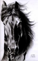 Friesian Stallion by ManiaAdun