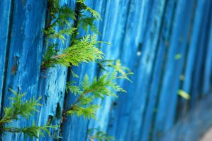 Blue fence by Hxes
