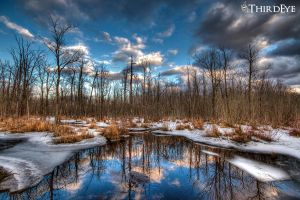 Winter Wetland by The-ThirdEye