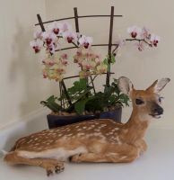 Fawn with flowers by Phoenix-Cry