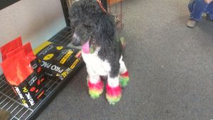 RASTA DOG by OccasionalSuicide
