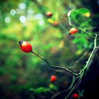 .Natural sweets by tgphotographer