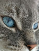 Those eyes... by Poezio