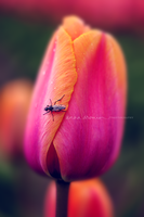Tulip Bug by inktice