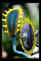 Chihuly Sunflower by Calzinger
