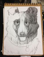 Border Collie WIP by earthytones