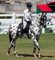 STOCK - Equitana 2013-48 by fillyrox