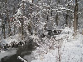 Snowy creek in the woods by Lark-Catalpa-Royal8