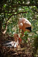 Pink Ibis...I think.. by AlmightyGingerOne