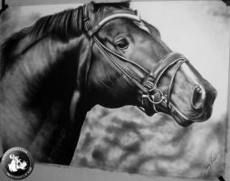 horse drawing (life-size) by KondaArt