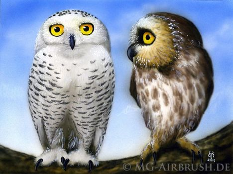2 little Owls by MG-Airbrush