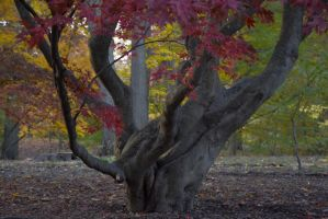 Twist of Color In November In the Arnold Arboretum by Miss-Tbones