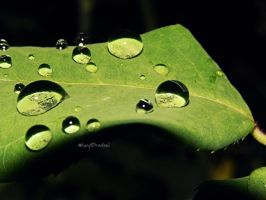 Waterdrops2 by MaryBrodzeli