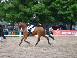 Dressage Riding Trot Speed Extended Stock by LuDa-Stock