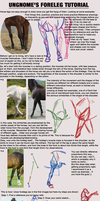 Foreleg Anatomy Tutorial by Ungnome