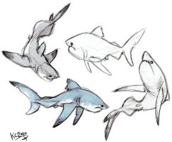 Great White Sharks by Polarkeet
