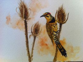 Yellow-Shafted Flicker by SithielElenbereth