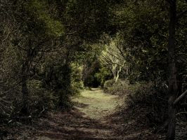 Secret Path by aka-daydreamer0
