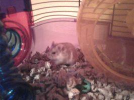 My Awesome Hamster Ruby by Ryanx2