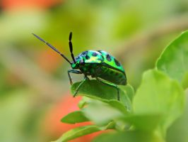 Green Bug by WillTC
