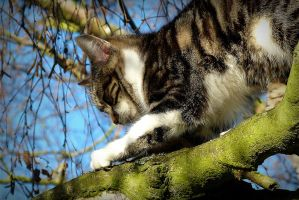 Minette scratching a branch by April-Mo
