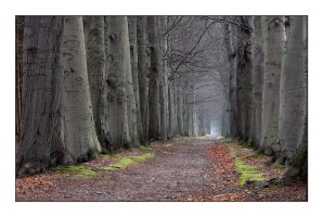 Another beech-tree lane by jchanders